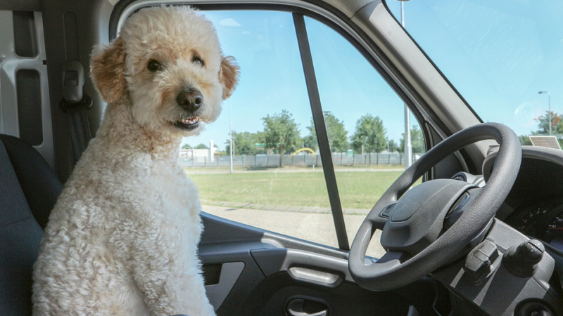 Dog Car Travel Accessories