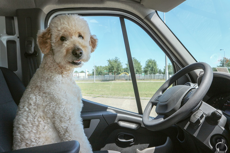 7 Most Essential Dog Car Travel Accessories