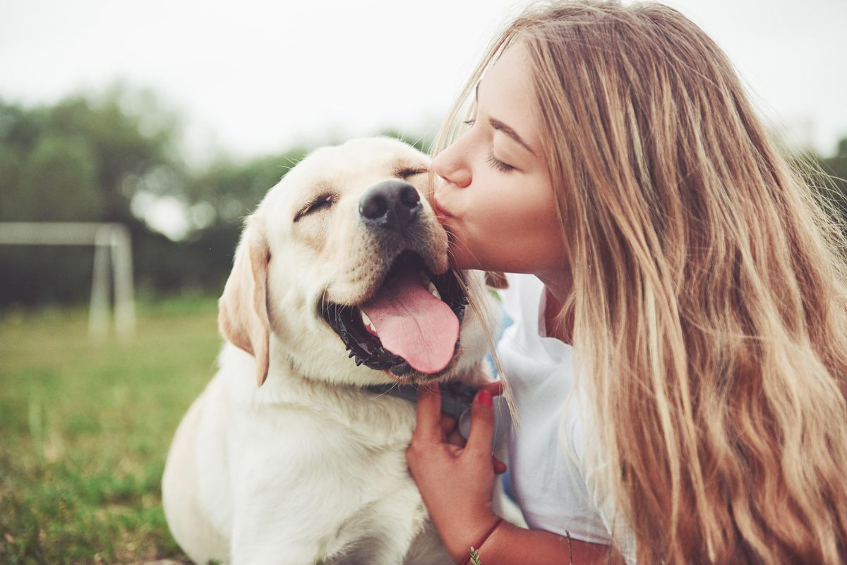 A Look at CBD Oil Products for Pets