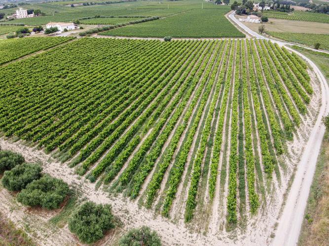 Drones in The Vineyard