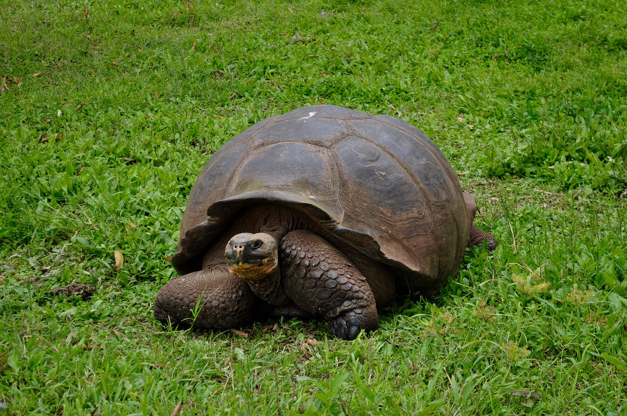 Everything to Know About El Chato Tortoise Reserve (Santa Cruz Island)